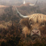 """""""All Creatures Great and Small"""" a photographic exhibition by local artist Paul Steven  Jan 10th – Feb 4th 2017"""
