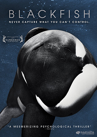 blackfish documentary at ciccic taunton